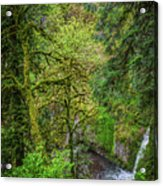 Bigfoot Country Acrylic Print