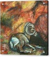 Bighorn Acrylic Print