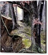 Bilbow's Path Acrylic Print