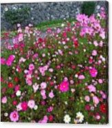 Biltmore Garden Acrylic Print