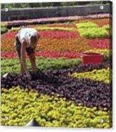 Biltmore Gardener Acrylic Print