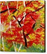 Birch 2 Acrylic Print