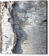 Birch Abstract 2 Acrylic Print