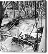 Birch And Stream Acrylic Print