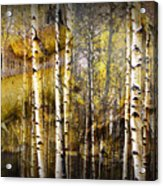Birch Bark And Trees Abstract Acrylic Print