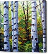 Birch Buddies Acrylic Print