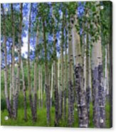 Birch Forest Acrylic Print by Julie Lueders