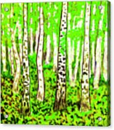 Birch Forest, Painting Acrylic Print