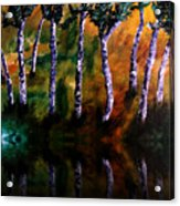 Birch Forest Reflections Acrylic Print