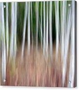 Birch Grove Impressions Acrylic Print
