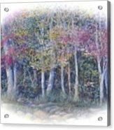 Birch Tree Gathering Acrylic Print