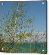 Birch Tree Over Lake Acrylic Print