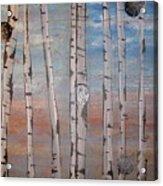 Birch Trees - Clouds Acrylic Print