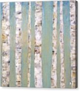 Blue Birch Trees Acrylic Print