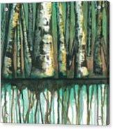 Birch Trees #5 Acrylic Print