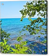 Birch Trees Above Lake Superior Off North Country Trail In Pictured Rocks National Lakeshore-mi Acrylic Print
