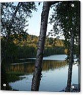 Birch Trees Along The Lake Acrylic Print