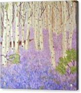 Birch Trees And Grape Hyacynths Acrylic Print