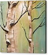 Birch Trees Color Pencil  Acrylic Print