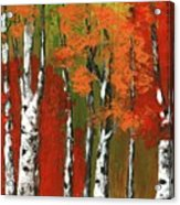 Birch Trees In An Autumn Forest Acrylic Print