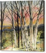 Birch Trees On Canvas Acrylic Print