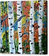 Birch Tree's Acrylic Print