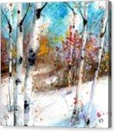 Birch Valley Acrylic Print