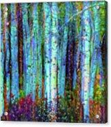 Birch Woods Acrylic Print