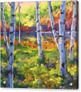 Birches 01 Acrylic Print