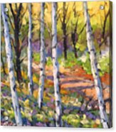 Birches 02 Acrylic Print