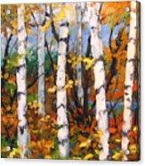 Birches 03 Acrylic Print
