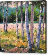Birches 04 Acrylic Print