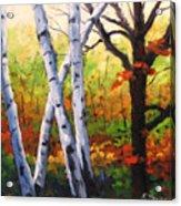 Birches 05 Acrylic Print
