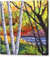 Birches 06 Acrylic Print
