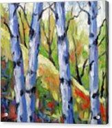 Birches 09 Acrylic Print