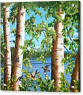 Birches Along The Androscoggin River Acrylic Print