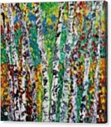 Birches And Scrub Acrylic Print