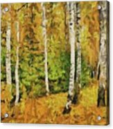 Birches And Spruces Acrylic Print