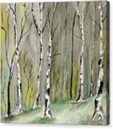 Birches Before Spring Acrylic Print