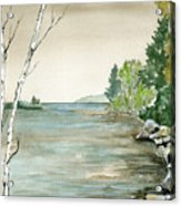 Birches By The Lake Acrylic Print