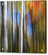 Birches In Autumn Forest Acrylic Print
