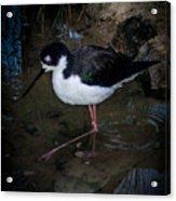 Bird 2 Acrylic Print