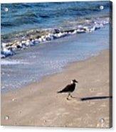 Bird 2009 Acrylic Print