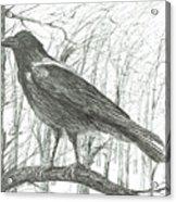 Bird, 2011 Acrylic Print