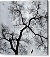Bird And Tree Acrylic Print