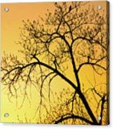 Bird At Sunset Acrylic Print