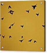 Bird Ballet Acrylic Print