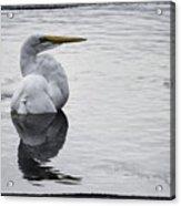 Bird Bath 4619 Acrylic Print