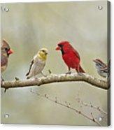 Bird Congregation Acrylic Print