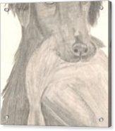 Bird Dog Acrylic Print